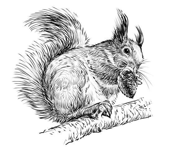 Gezeichnetes Eichhörnchen